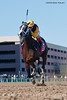 Broadway's Alibi (Vindication), wins the 2012 GIII Comely Stakes at Aqueduct Racetrack in New York.