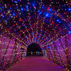 Zoo Lights 2013 - Highlights