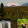 Wonderful campsites and brown bear sightings and gorgeous views of Denali or Mount McKinley make Denali National Park an unforgettable experience (USA Alaska Denali Park)
