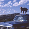 09 Dog on Roof of Ford Truck, Interstate Near Trinidad, Colorado