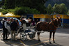 Horse and Carriage in Interlaken