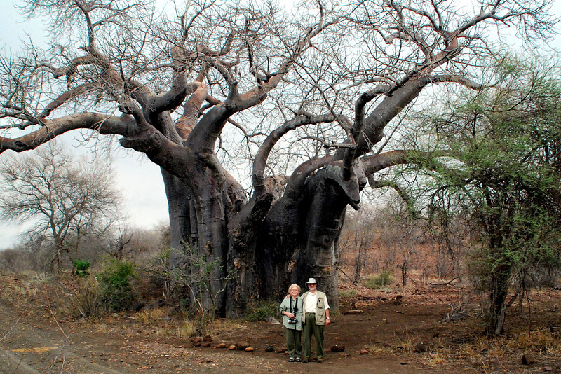 andy and betty by  baobab tree
