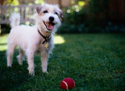 Stock photo of dog with ball