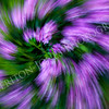 Colorful Abstract Flower Spiral Background