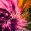 Colorful Abstract Background Flower Garden Swirl