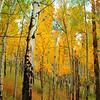 Aspen Grove~ Estes Park, CO.