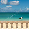 Sunny Tropical Seashore with Gull Sitting on Fence