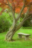 Maple and Bench