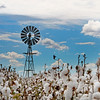 Cotton Pickin'