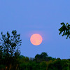 This full moon rose pink in the Eastern sky.