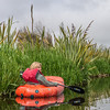 Pack-rafting in the Sinclair Wetlands