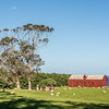 Matanaka farm buildings, Waikouaiti: stables and privvy