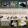 Montana collage Animals