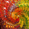 Fall's Flights - A Maple Leaf Tapestry