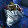 And here's her purse, that bottomless bag of tricks.<br /> Silver lamé to match her jbeeweled, silver shoes and frosty lipstick, nails and hair. <br /> (7/24/15)