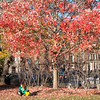 Photo of a woman taking a reading break underneath a tree in the Boston Commons. Boston, MA. November 18, 2013.