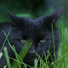 Black cat wandering the Copp's Hill Cemetery on June 11, 2014. Photo taken by Hannah Evans