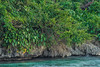 Rugged Shoreline in Port Antonio Adorned with Lush Tropical Plant-life, Jamaica