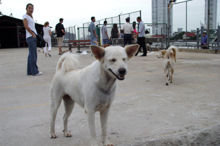 We were waiting for the boat when these dogs came. Happy dog I think.