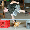 Ethan Ziethaon, 10, of Wellington, races his chicken Bearded Lady in the fowl race at Lorain County Fair Aug. 22.  Steve Manheim