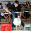 Cam Rose of Columbia Twp. races his turkey Gobblers in the fowl race at Lorain County Fair Aug. 22.   Steve Manheim
