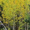 The first fall foliage appears in the national park on Wednesday. While the Autumn Gold festival has been cancelled this year, the fall colors will still be out.
