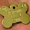 Coco,  an 11-year-old female chocolate Labrador retriever who is owned by Mandy Beckett, now wears the dogbone-shaped #1 Newtown dog tag for the 2014 dog-licensing year, having won that honor through a recent raffle conducted by Town Clerk Debbie Aurelia Halstead. (Gorosko photo)