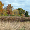 Trails throughout the property of the proposed Catherine Violet Hubbard Animal Sanctuary will continue to allow vistas of the 34-plus acres in the heart of Newtown. (Crevier photo)