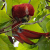 The Macaw dropped the seed on me after taking this shot!!