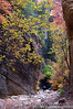 Orderville Canyon Hiker Zion Fall Colors