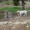 Agamemnon and Oakley N get ready to play
