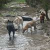 Jazz D  Chloe W Bailey W and Daisy A enjoying the water