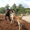 Tower W and Shiner B get their play on as Chipper R comes to join the fun