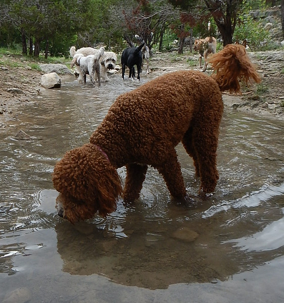 Daisy A examines the creek water