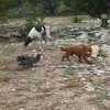 Blu W is in hot pursuit of Daisy A