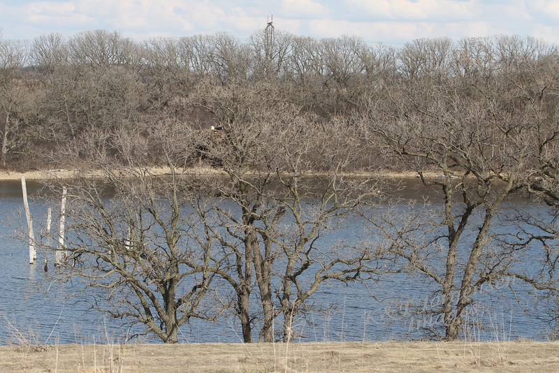 img_20130429_30228_Nesting_Eagle_on_Bailey_Lake_distance_c