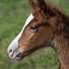 Colt Foal, ElkView Band 1, Breathitt County
