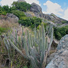 The french side of the island can be very dry, so it's not uncommon to see cactus on the hillsides.