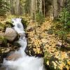 Boulder Brook Autumn