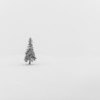 Merry and Alone