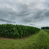 Amish Country Cornfield