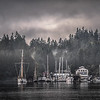 Bainbridge morning fog