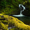 Falls Creek, Quinault Rain Forest, Olympic NP
