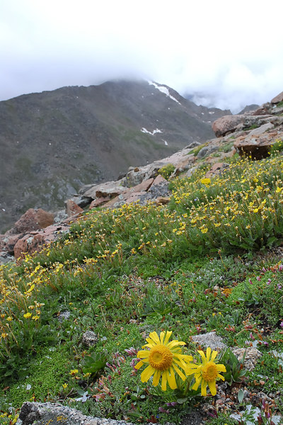 Taken on Mt Evans Colorado.............................................                                 ©2006 Daniel P Woods...