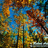 Hikers' enjoy blue skies over blazing autumn foliage near the Wolf River (USA WI White Lake)
