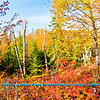 Blazing autumn foliage and blue skies embrace the steep shores of the Cascade River upstream of the MN Highway 61 bridge near the Lake Superior Hiking Trail within Cascade River State Park (USA MN Lutsen; RAO 2012 Nikon D800 Image 6432)