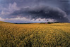 Storm Clouds Over Farmland, Bradford, Ontario
