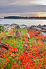 Maine, Acadia National Park, Schoodic Peninsula,  Fall Colors, Landscape, 缅因, 阿卡迪亚国家公园 秋色 海岸 风景
