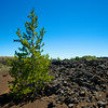 Growth in Lava Fields