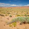 Scrub in Utah Desert